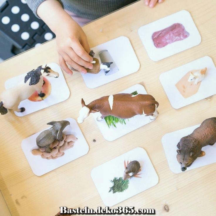 arbeit welches fressen die tiere  basteln mit kids