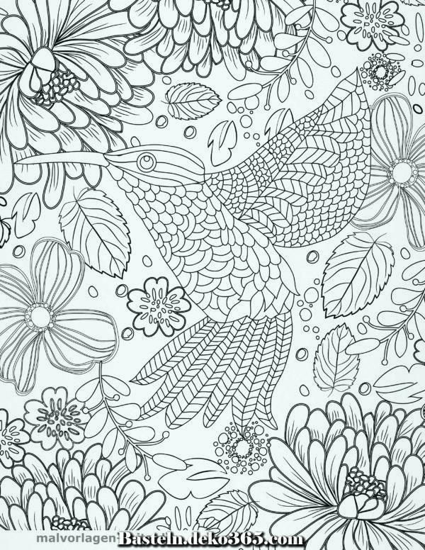 adult hummingbird coloring book  malvorlagen