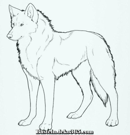 wolf färbung  malvorlagen zu gunsten von kinder  basteln
